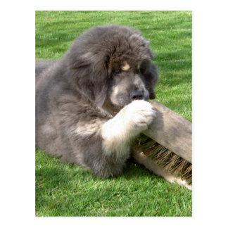 Carte Postale Mastiff tibétain Jampo avec le balai