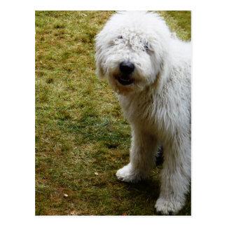 Carte Postale Mauvais chien crépu pelucheux de jour de cheveux