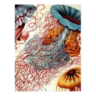 Carte Postale Méduses colorées vintages