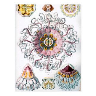 Carte Postale Méduses d'Ernst Haeckel Peromedusae