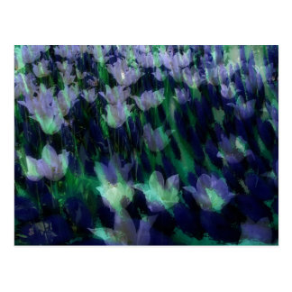 Carte Postale Mer des tulipes