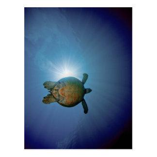 Carte Postale Mer sous-marine de Turtle| Andaman, Thaïlande