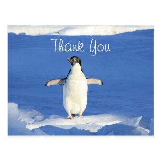 Carte Postale Merci drôle de pingouin