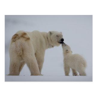 Carte Postale Mère d'ours blanc avec l'petit animal