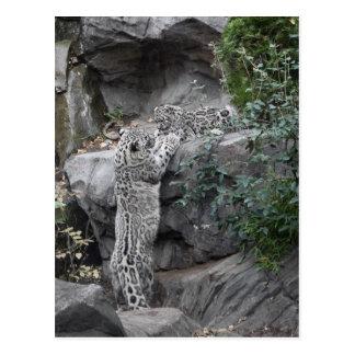 Carte Postale Mère et CUB de léopard de neige