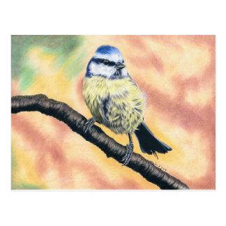 Carte Postale Mésange bleue - dessin de goupille de couleurs