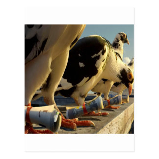 Carte Postale Message animal abstrait de pigeon