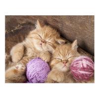 Carte postale mignonne de chat
