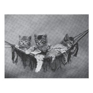 Carte postale mignonne de chatons