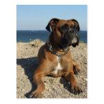 Carte postale mignonne de chien de boxeur
