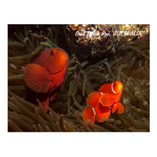 Carte postale mignonne de Clownfish