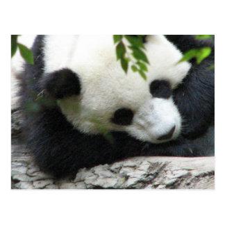 Carte postale mignonne de panda