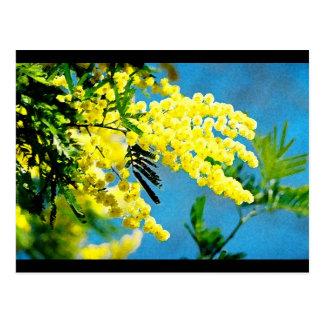 Carte Postale Mimosa de France