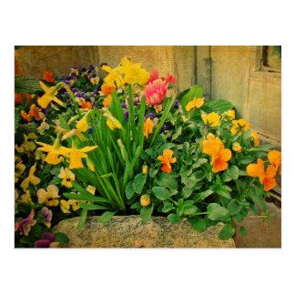 Carte Postale Mini jardin de printemps