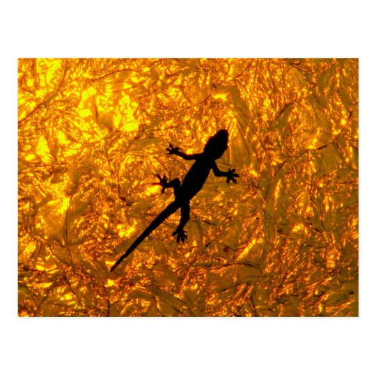 Carte Postale Miscellaneous - Bent-Toed Gecko & Golden Shadow