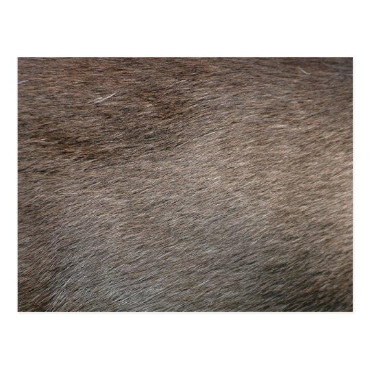 Carte Postale Miscellaneous - Grey Fur Three Pattern