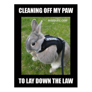 Carte Postale Mlle Bunz Cleaning Paw Postcard