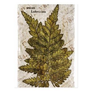 Carte Postale Modèle tropical de fougères botaniques vertes de