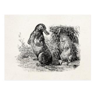 Carte Postale Modèle vintage de fourmilier de porc-épic