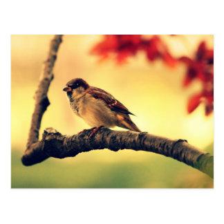 Carte Postale Moineau dans un arbre