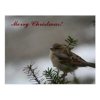 Carte Postale Moineau de Joyeux Noël !