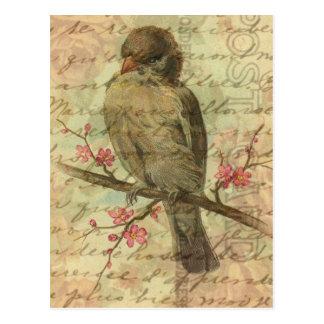 Carte Postale Moineau vintage