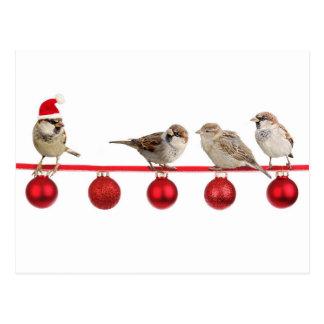 Carte Postale Moineaux d'oiseaux de Noël