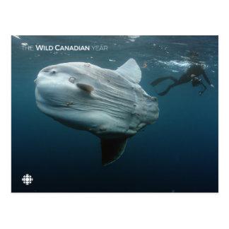 Carte Postale Mola de Mola