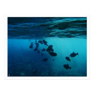 carte postale, molokini, hawai'i, plongeant