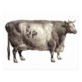 Carte Postale Mon bovin d'animal familier (Taureau ou vache)