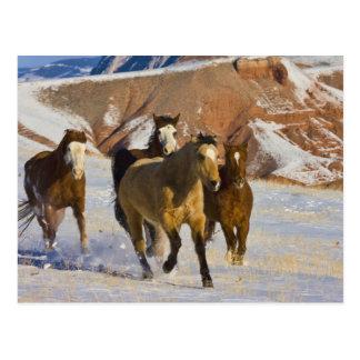 Carte Postale Montagnes de Big Horn, chevaux fonctionnant dans