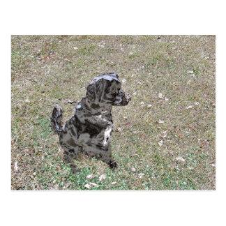 Carte Postale Montres noires de chien de laboratoire