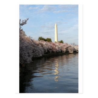 Carte Postale Monument de Washington de fleurs de cerisier