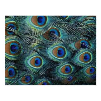 Carte Postale Motif dans les plumes masculines de paon