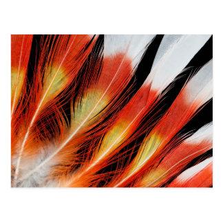 Carte Postale Motif de plume de cacatoès