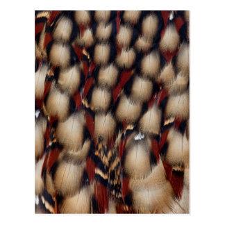 Carte Postale Motif de plume de Tragopan de Cabot