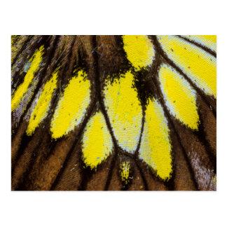 Carte Postale Motif en gros plan d'aile de papillon tropical