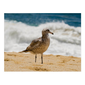 Carte Postale Mouette 1 de Cabo