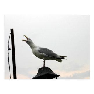 Carte Postale Mouette de chant de CT