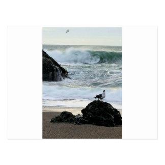 Carte Postale Mouette par la mer