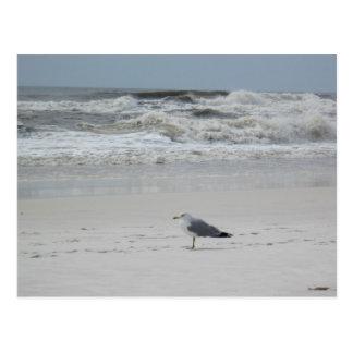 Carte Postale Mouette sur la plage