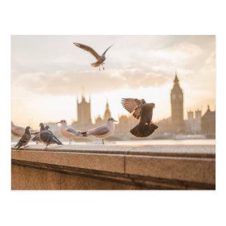 Carte Postale Mouettes de Londres