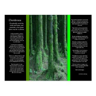 Carte postale moussue foncée de forêt de