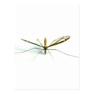 Carte Postale moustique