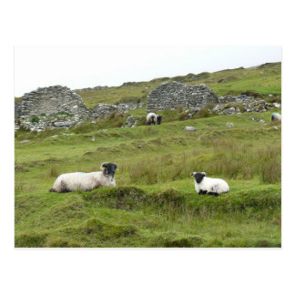Carte Postale Moutons de l'Irlande