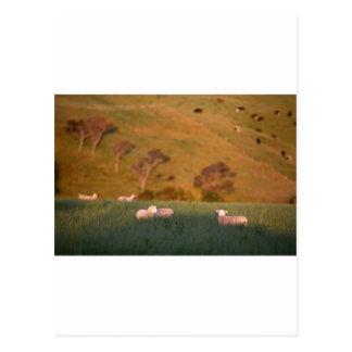 Carte Postale Moutons frôlant le pâturage vert luxuriant