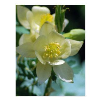 Carte Postale Moyens de fleur de Columbine de gagner