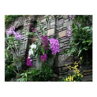 Carte Postale Mur des orchidées