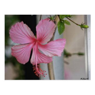 carte postale mylifeisart hibiscus rose