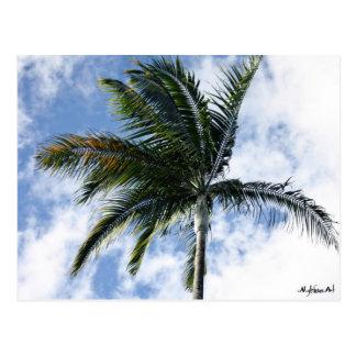carte postale mylifeisart palmier
